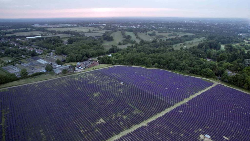drone aerial photo